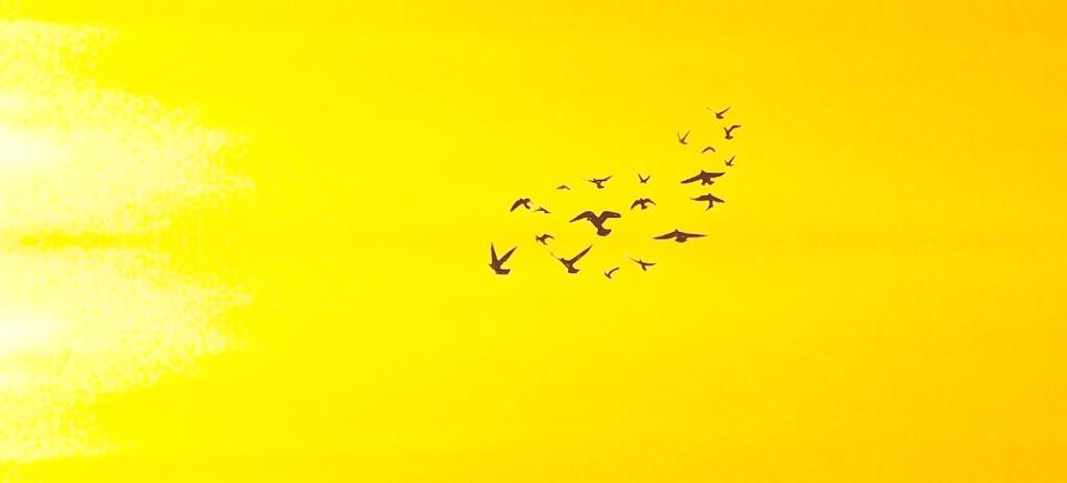 birds-3120988_960_720