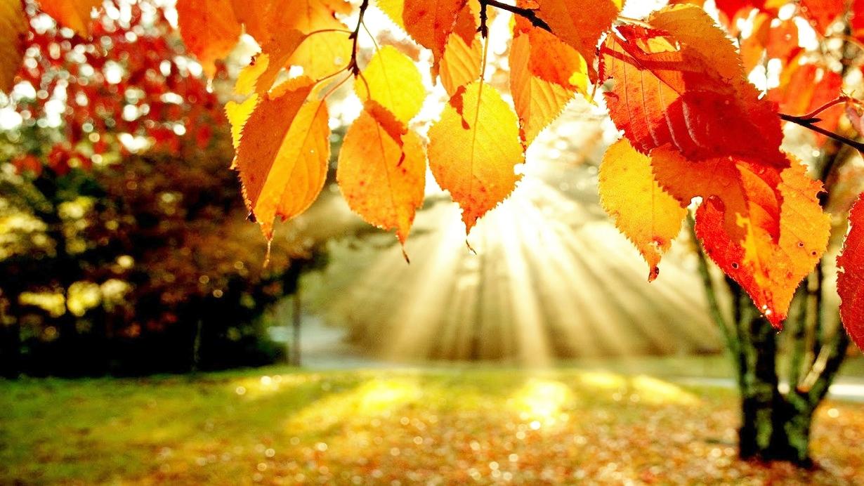 Joy Way: l'autunno dell'abbondanza