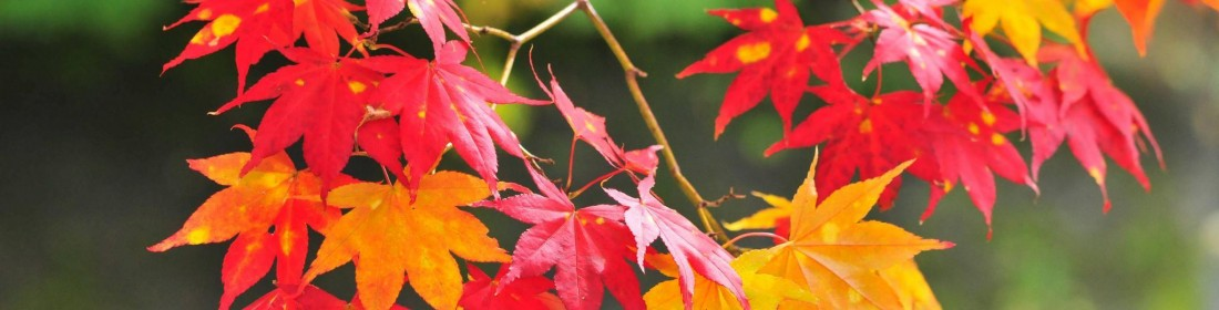 autumn-leaves-flowers-branches